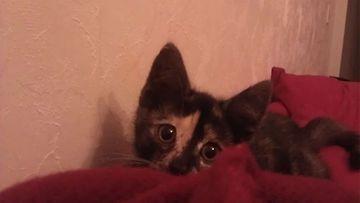 Vappu-kissa. Kuva: Taina Haavanlammi