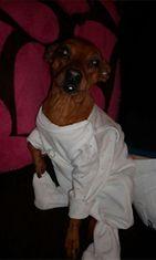 """Pena-koira: """"Ikuinen vauva;)"""" Kuva: Tanja Lehto"""