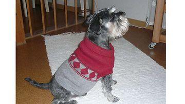 """Veeti-koira: """"Veikko ja uusi villapaita."""" Kuva: Anne Peltola"""
