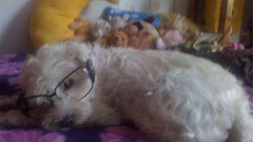 """Sissi-koira: """"näöllä on väliä!"""" Kuva: Marja Pimiä"""