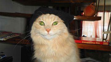 """Herra Svensson -kissa: """"Täällä vartioin minä!"""" Kuva: Katja Peltonen"""