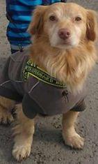 """Caro-koira: """"Saimme ihanan Caron espanjalaiselta löytöeläintarhalta kotiin 3.3.13. Tassunkuvia on nyt kaikkien sydämet täynnä!"""" Kuva: Jaana Rosvall"""