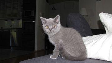 """Rölli-kissa: """"Ihmeellinen maailma."""" Kuva: Päivi Haataja-Kulmala"""