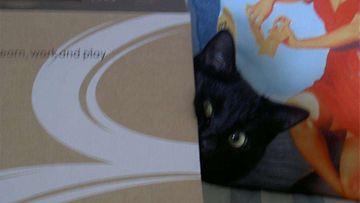 """Velmu-kissa: """"Nimensä veroinen ihana musta katti."""" Kuva: Helena Mustonen"""