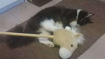 """Ukko-kissa:"""" Mites tänne kepparin kyytiin mentiinkään?"""" Kuva: Mari Rantanen"""