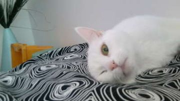 """Tiltu-kissa: """"Taasko se kuvaa äääääh"""" Kuva: Sini Kuvaja"""