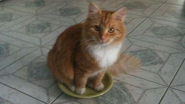 """Onni-kissa: """"Mamma Ruoka on loppu pitää kai ite istua kuppiin."""" Kuva: Ritva Tuukkanen"""