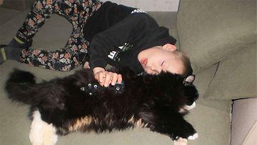 """Tapsu-kissa: """"Olen 4v Tapsu, jouduin muuttamaan uuteen kotiin edellisen perheen allergian vuoksi ja nyt minulla on uusi koti ja hyvät olot ja nautin täysillä."""" Kuva: Tarja Hyvärinen"""