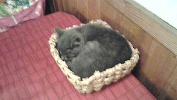 """Miksu-kissa: """"Miksu nukkuu jouluaattona korissa."""" Kuva: Anton Pihlström"""