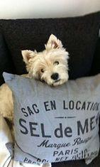 """Maggie-koira: Tykkään jemmailla luitasekä muita herkkuja sohvan ja tyynyjen väliin. Tässä jäin kiinni itseteossa."""" Kuva: Heli Kurki"""