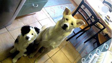 """Seppo ja Pablo: """"Sepon ja Pablon ensimmäisiä yhteisiä päiviä, kuva saatu nakin avulla :)"""" Kuva: Tiina Tuohino"""