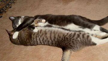"""Vili ja Rami: """"Veljeys on joskus halaamisen arvoinen juttu."""" Kuva: Paula Korhonen"""