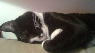 """Hönö-kissa: """"Kissani rakastaa nukkumista. Asennot on aina niin omalaatuisia :D"""" Kuva: Marianne Haapala"""