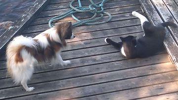 """Piccolo-koira: """"Piccolon sydänystävä kisu."""" Kuva: Erja Hartikainen"""