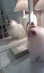 """Vivian-kissa: """"Kahtokee nyt minnuu, minnuu suapi kyllä kahtoo :)"""" Kuva: Satu Horttanainen"""