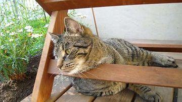 Simo-kissa: Kesää odotellessa! Kuva: Anne Kiuttu