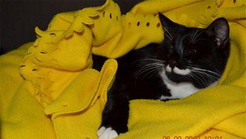"""Robi-kissa: """"Eka päivä uudessa kodissa! Uudessa pesässä !:)"""" Kuva: Ingrid Sepp"""