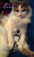 """Aksu-kissa: """"Hieman yksityisyyttä, kiitos."""" Kuva: Aija Ramsi"""
