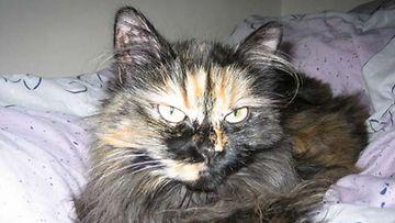 """Vito-kissa: """"Vito poseeraa lempipaikassaan sängyssä :D"""" Kuva: Anu Juutinen"""