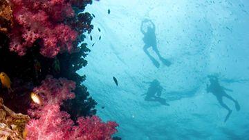 Sukeltaessa pääsee tutustumaan kiehtovaan, vedenalaiseen maailmaan.