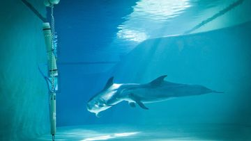 delfiini.JPG