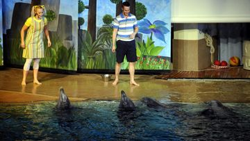 delfiinit.JPG