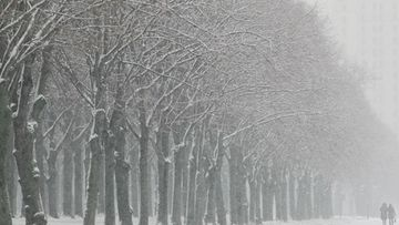 Two people walk along a tree-lined snow-covered avenue in front of Moscow's University building in Moscow, Russia, 28 November 2012.