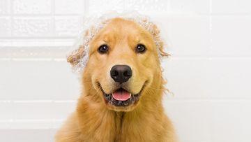 Valmiina suihkuun! Korvat on suojattu.