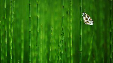Vihreä väri rentouttaa.