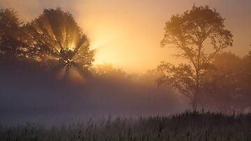 Aurinko valaisee myös sumun keskellä.