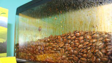 Tätä työpaikan kahviautomaattia ei ainakaan ole pesty päivittäin ohjeiden mukaan.