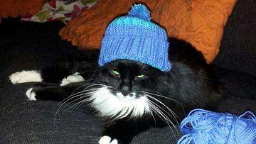 """Hertta-kissa: """"No niin...Nyt se sit on valmis ja sopiikin mun tyyliini tosi makeesti! Vai mitä?"""" Kuva: Jaana Kilkki"""