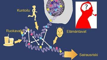 Lisaantyva_genetiikan_tietamys_hamartaa_perinteise