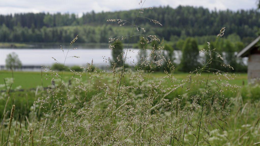 Suomen Yleisimmät Kasvit
