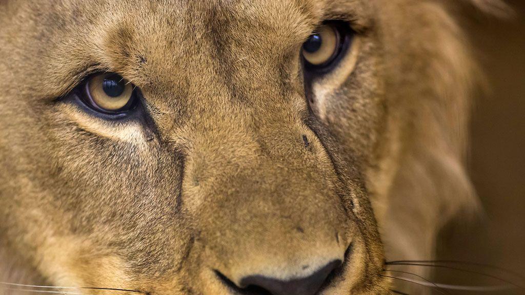 30 vuotias nainen leijona luonne