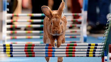 Pääsiäispupuille järjestettiin  Easter Rabbit Steeple Chase -kisat Prahassa 14.4.2014