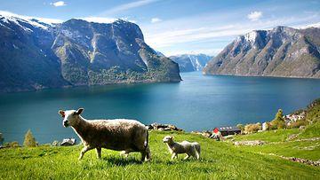 aurlandsfjorden (2)