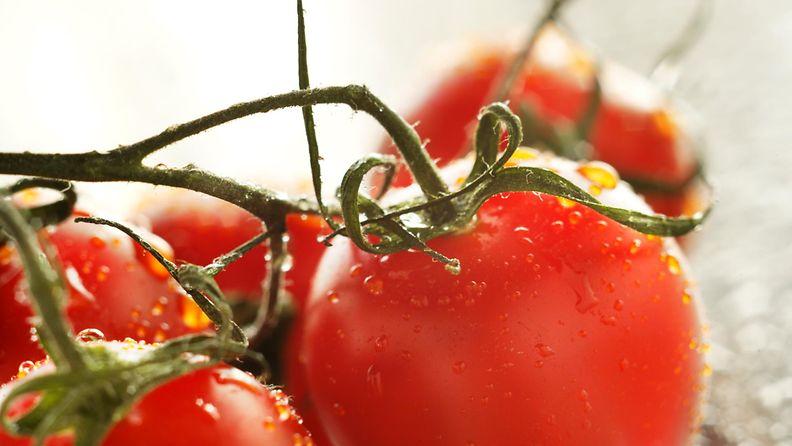 tomaatti2
