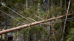 Puuskittainen tuuli yltynyt kovaksi – tuhannet sähköttä ja junaliikenne paikoin poikki