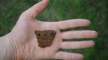 Kookkain Juovvagielaksen asuinpaikalta löytynyt saviastian reunakappale Kilpisjärvellä 27. kesäkuuta 2011.