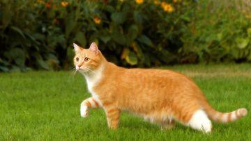 Kissa pihalla