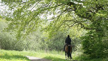 Nainen ratsastaa metsässä