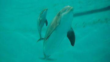 S�rk�nniemen delfinaarion tulevaisuus vaakalaudalla