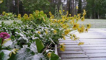 Lunta maassa Kemijärvellä 17. kesäkuuta 2014. Lukijan kuva: Juha Laiti