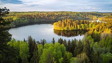 Suomi järvimaisema metsä