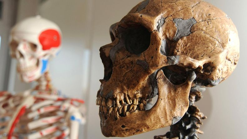 Neandertalinihminen