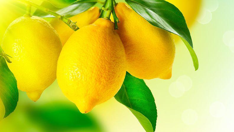 sitruuna, laihdutus, terveysvaikutus