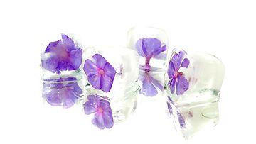 jääkuutiot kukat