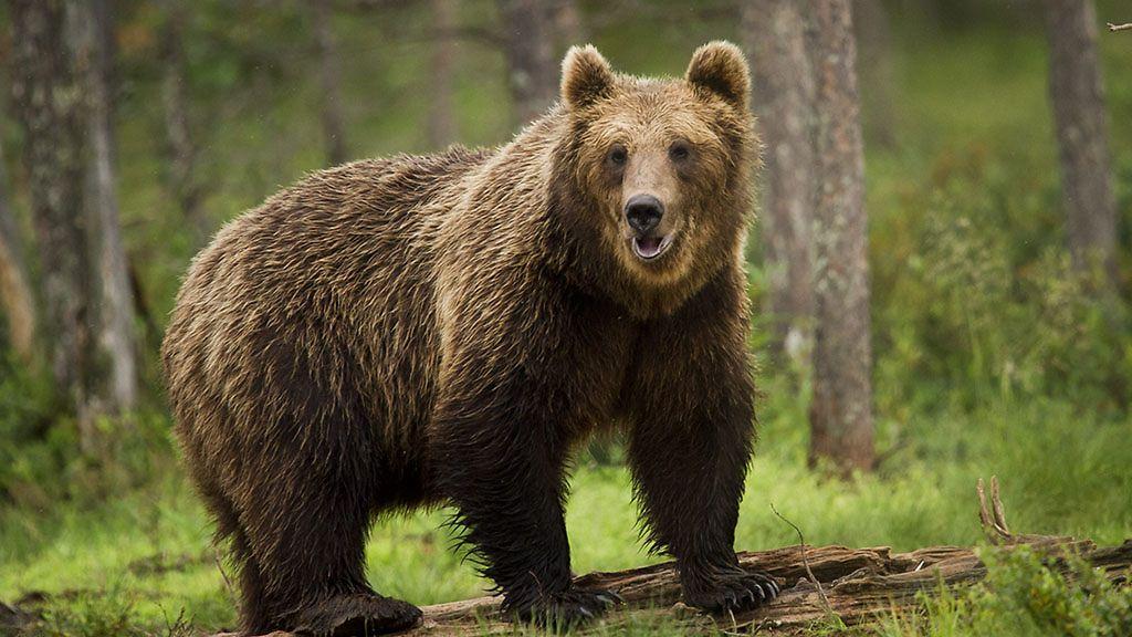 Karhun Kansa