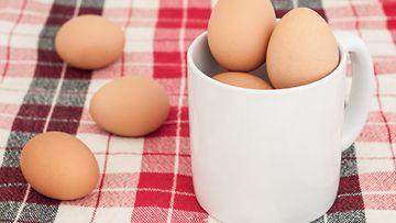 Kananmunan Kuoriminen